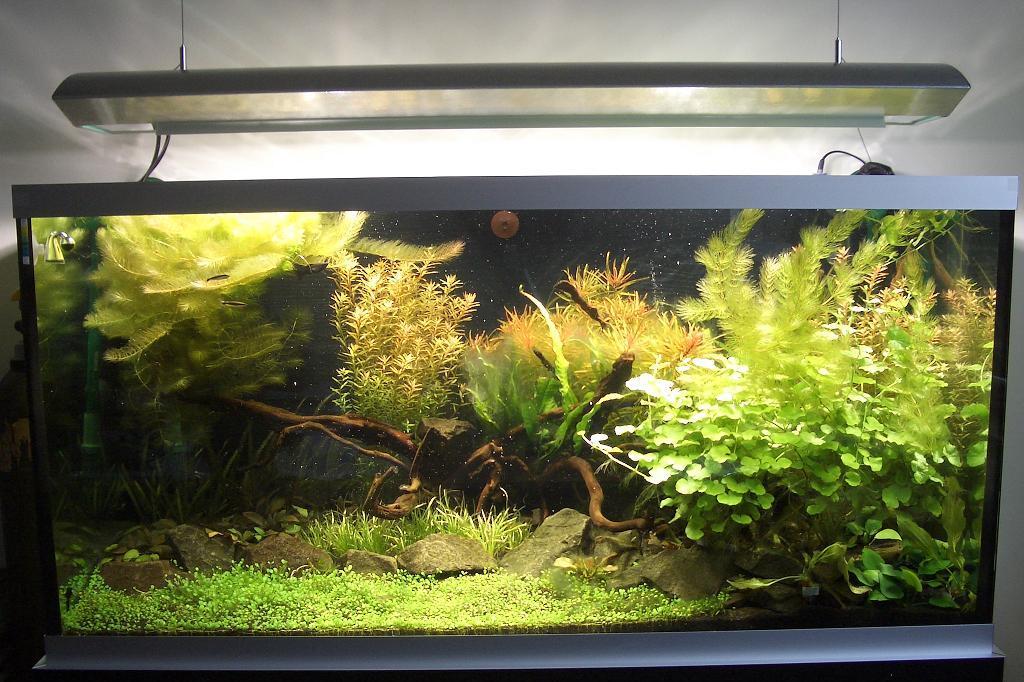 Fadenalgen bei 0,85 W/ltr. : Algen - Aquascaping - Aquarium ...